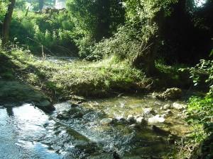 il fiume1